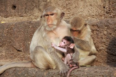 Mother monkey with her cute baby