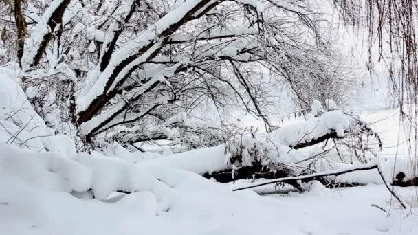 Winterlandschaft, Schneefall im Park, Schnee im Wald