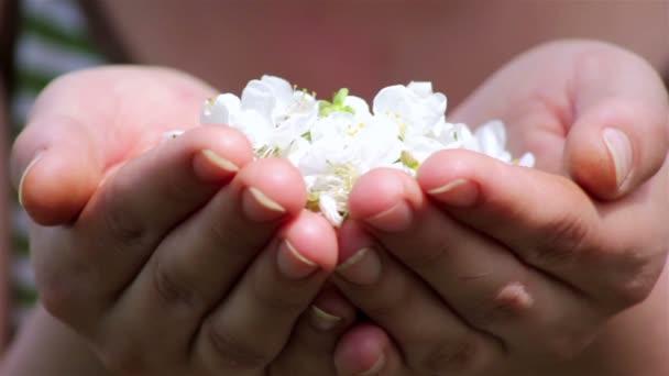 okvětní lístky foukané z rukou, vítr v dlaních naplněné třešňový květ