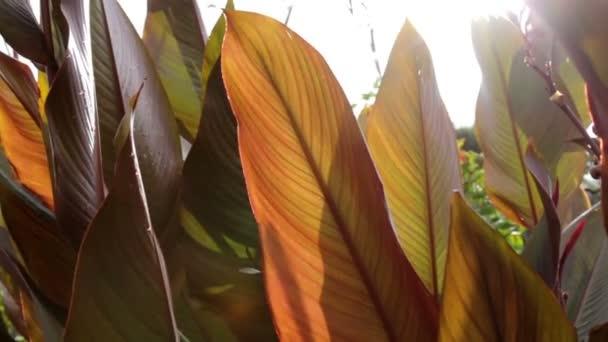 podzimní listí, podzimní listy