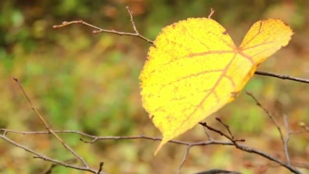 őszi levelek (közelről)