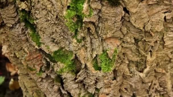 Bark of a tree (close-up)