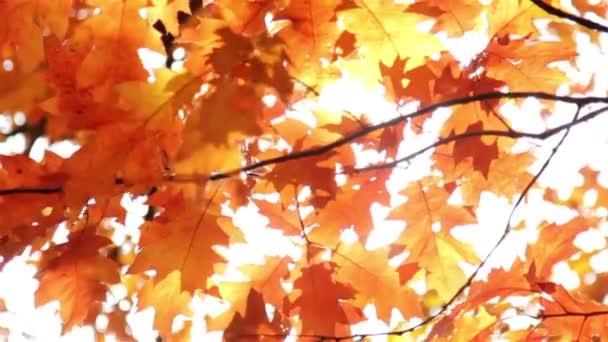 Sonne scheint durch die Herbstblätter