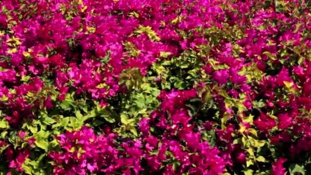 rostliny v parku, květiny, keře a stromy v parku