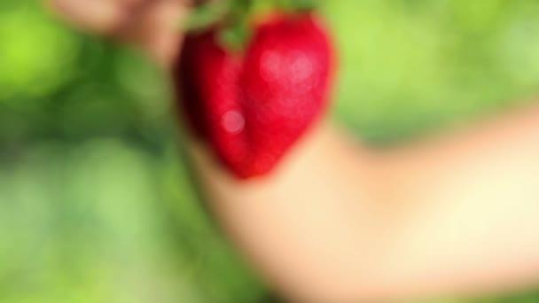 čerstvé, šťavnaté, jahody v hands.hand drží čerstvé jahody