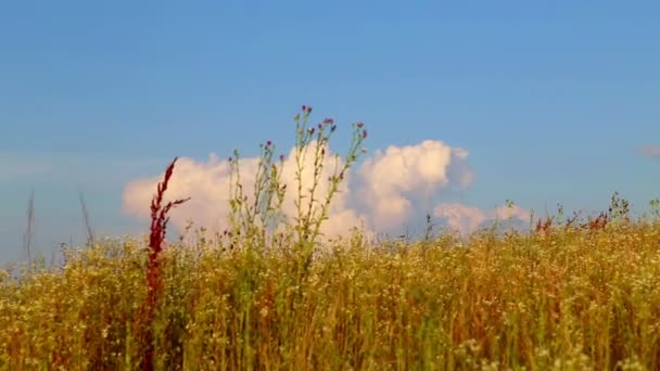 Landscape blue sky with white clouds on a  of a field of grass and flowers.