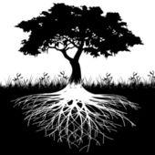 Silueta kořeny stromu