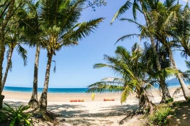 Tropical Beach Kayaks