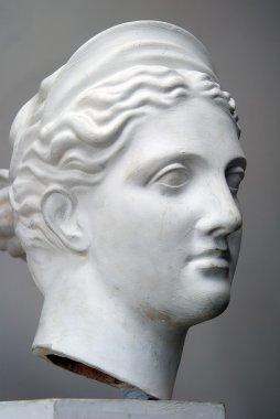 Plaster head model