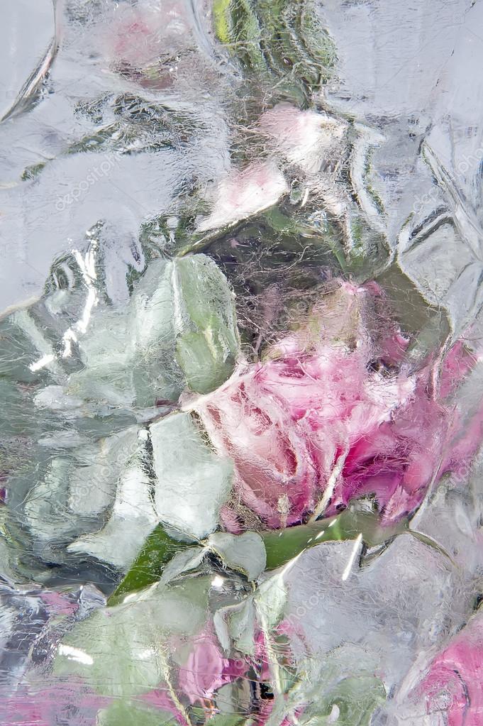 Frozen pastel pink flowers