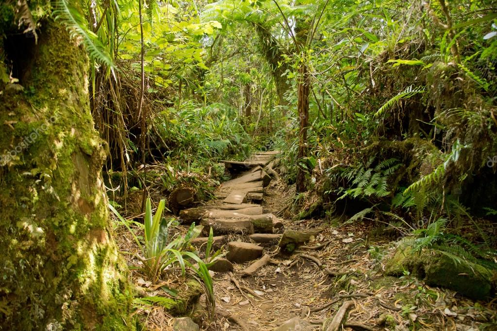 Trails in reunion