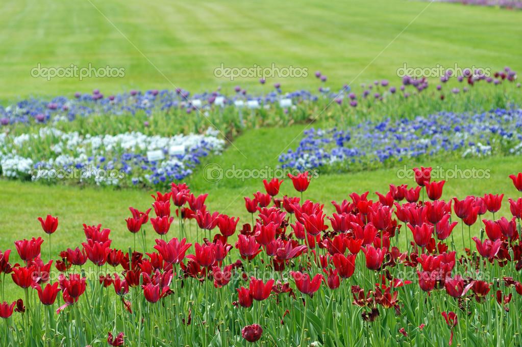 Prato di fiori in estate — Foto Stock © kelifamily #41097305