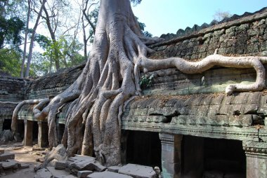 Doubling of roots. Ta Prohm temple