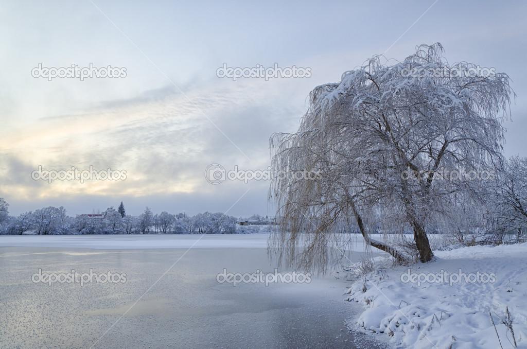 Paesaggio invernale con lago e albero nel gelo foto for Disegni paesaggio invernale