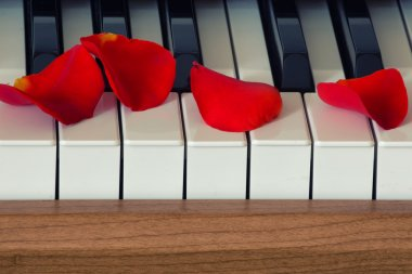 Scarlet rose petals is lying on piano keyboard stock vector