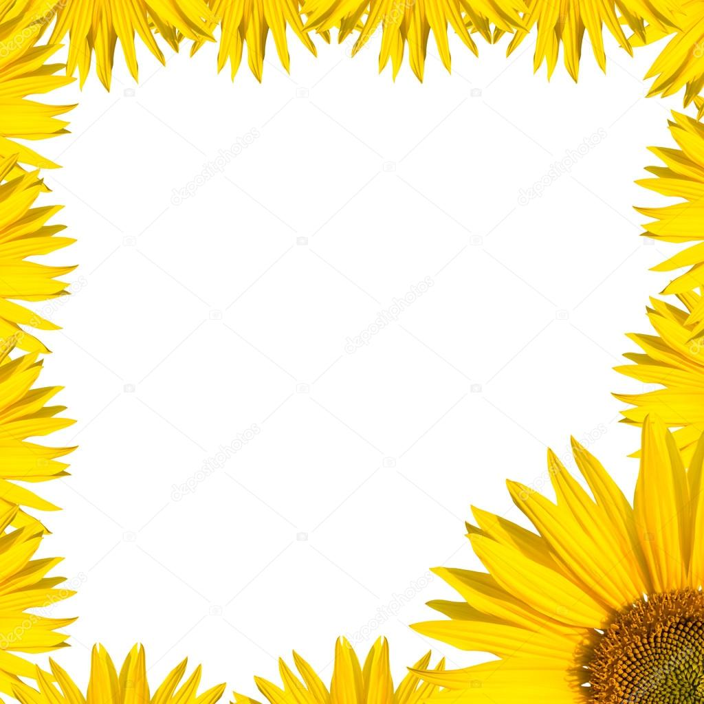 Sunflower border design — Stock Photo © spcreative #36936105
