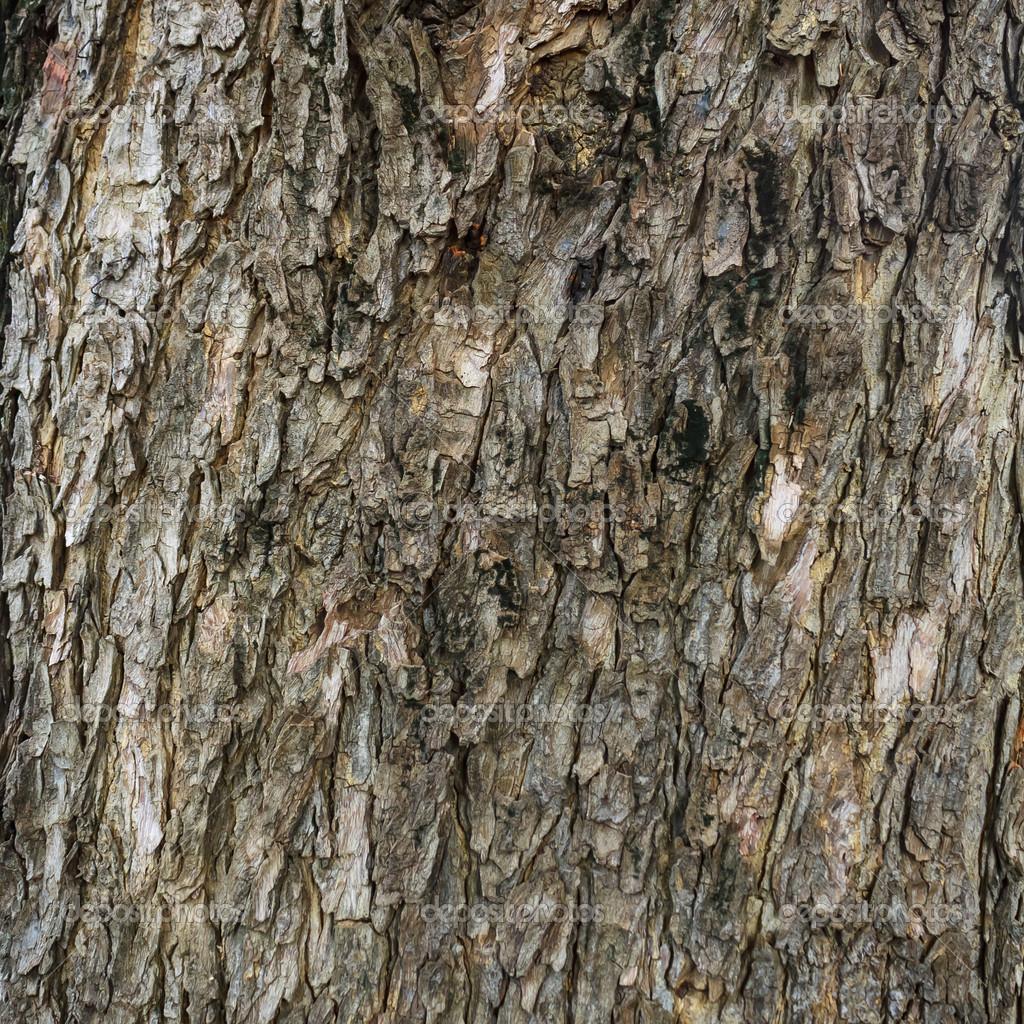 Teakbaum rinde  Rinde — Stockfoto © tongdang #36456351