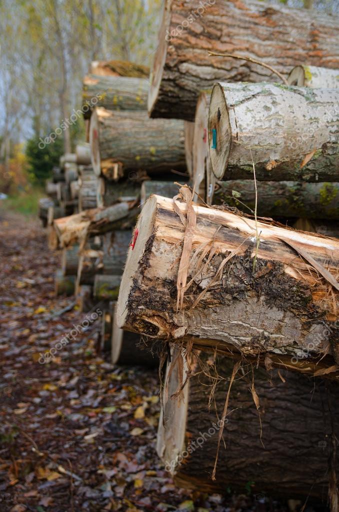 Log pile prepaired for winter