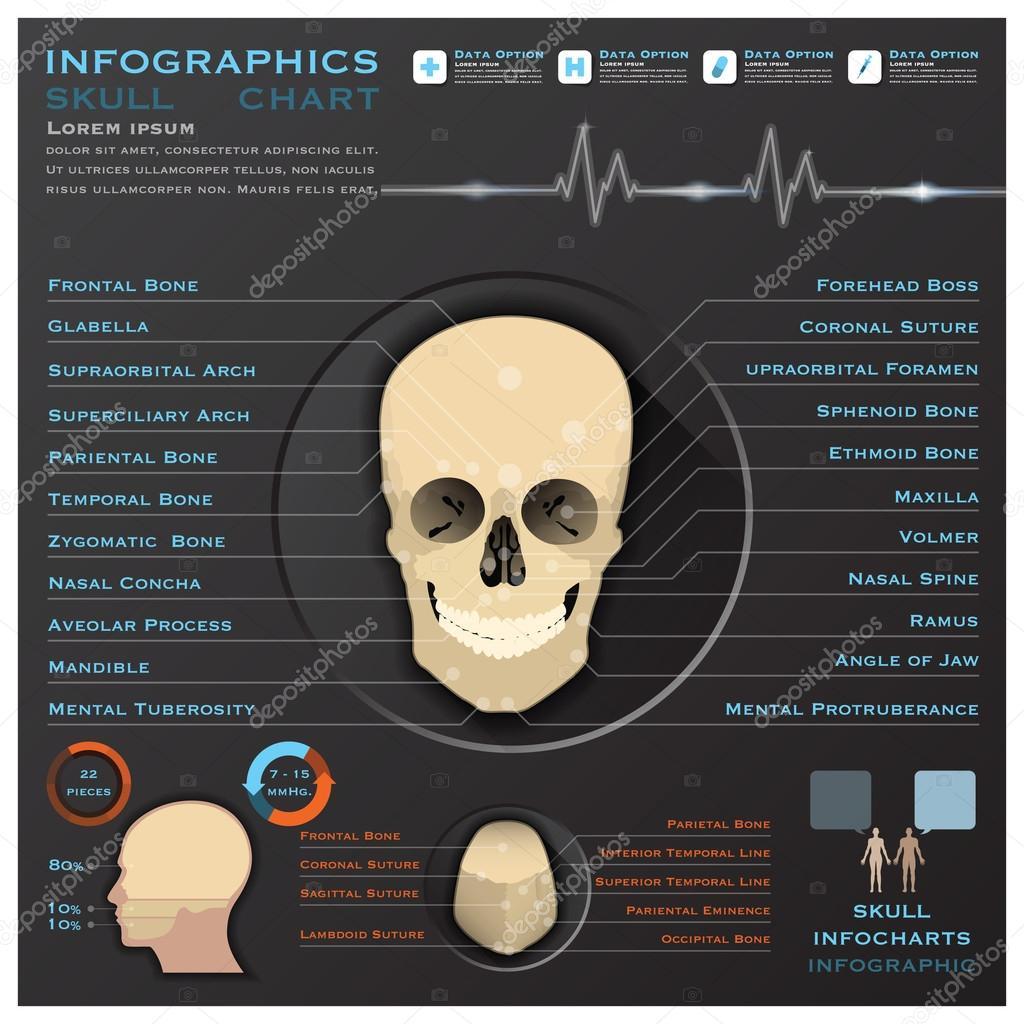 cráneo humano jefe médico infografía infochart — Vector de stock ...