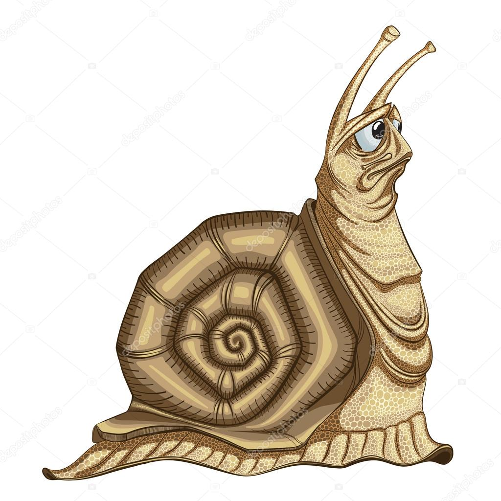 Illustration of the sad  snail on a white background