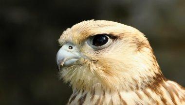Birds of prey,