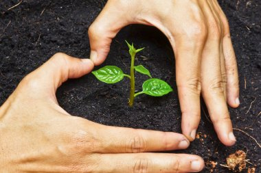 Two hands forming a heart shape around a young green plant - planting tree
