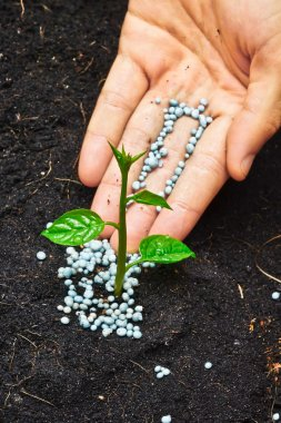 A hand giving fertilizer to a young plant - planting tree