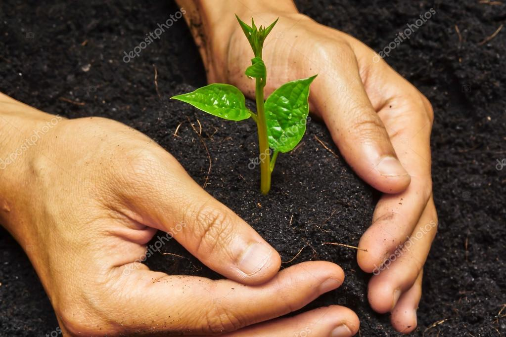 Two hands holding and caring a young green tree