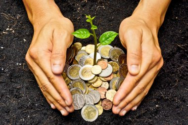 Hands holding tress growing on coins