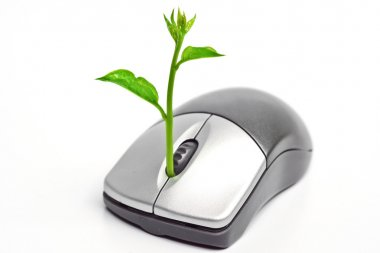 A tree growing on a mouse