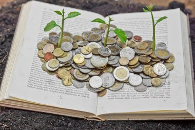 Tree growing from books with coins