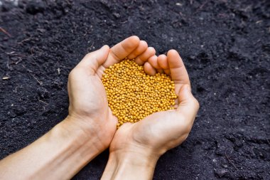 Hands holding chemical fertilizer as a heart shape over fertile soil