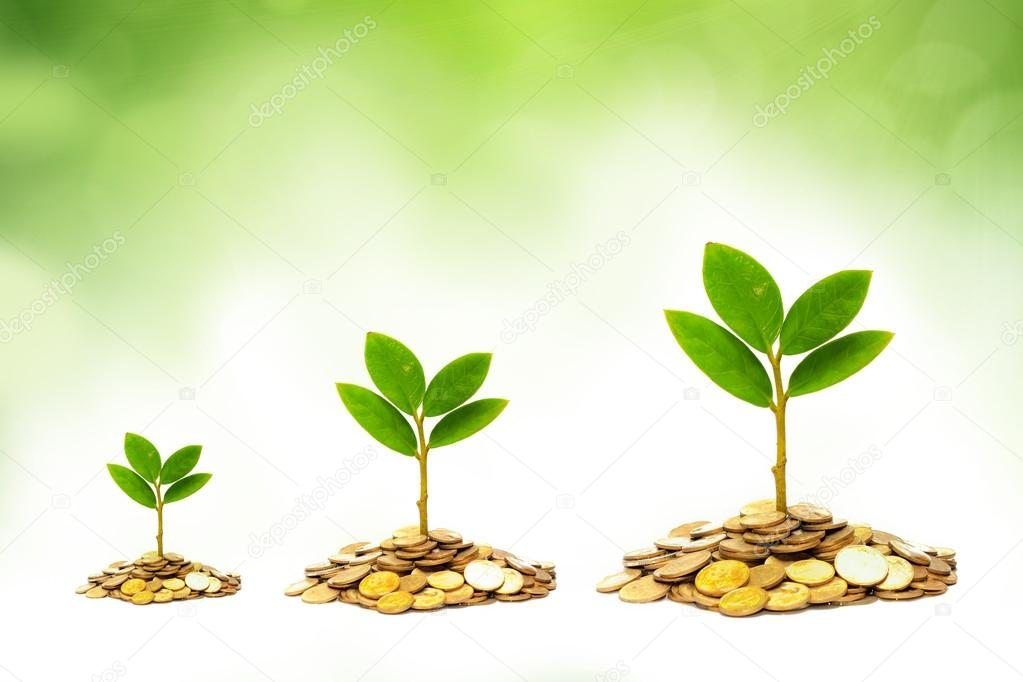 Trees growing on piles of golden coins with green background