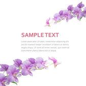 orchidej pozadí