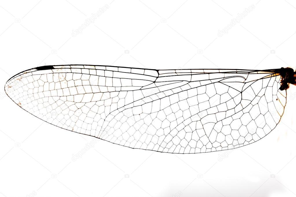 ala de libélula — Foto de stock © davidewingphoto #37212579