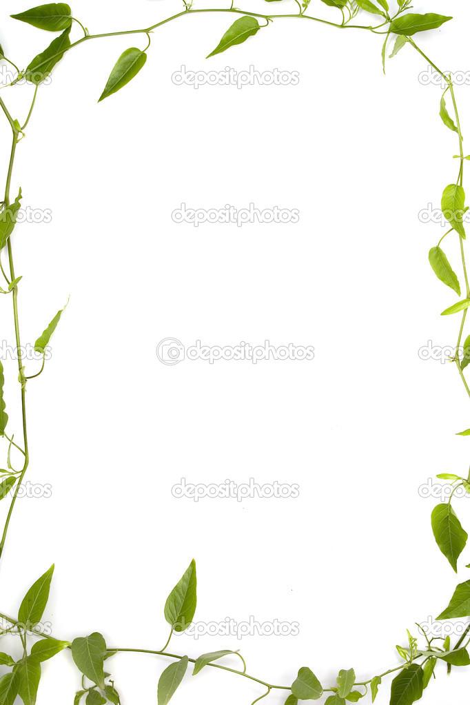 Marcos de bot nicos foto de stock davidewingphoto 37257823 - Marcos para plantas ...