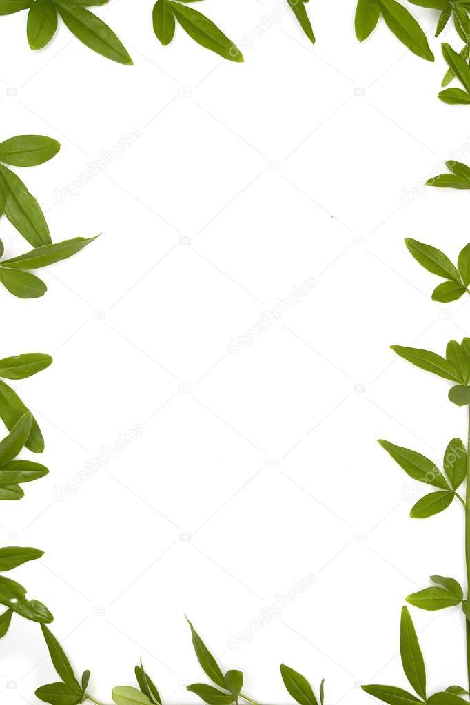 Marcos de bot nicos foto de stock davidewingphoto - Marcos para plantas ...