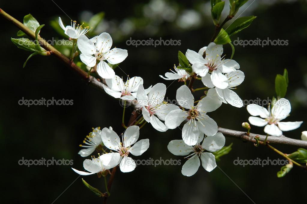 Fleur D Avril Photographie Kshatry C 38821415