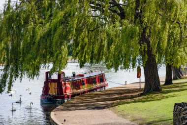 Narrow boat moored under a willow tree in Windsor