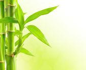bambusové pozadí s kopií prostor