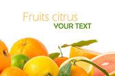 Fotografie citrusové plody
