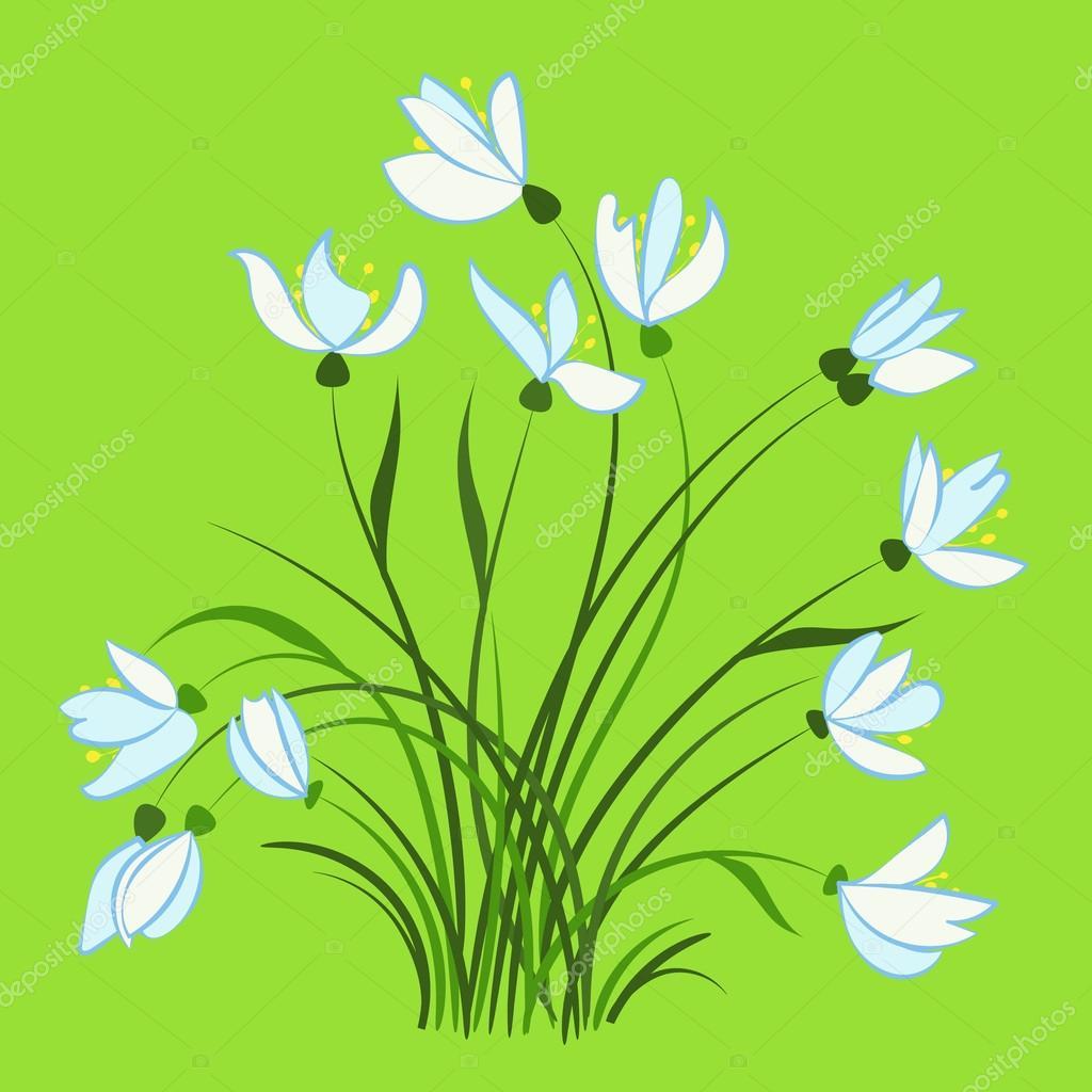 Pierwsze Wiosenne Kwiaty Przebiśniegi Grafika Wektorowa