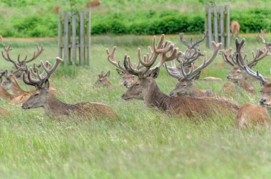 group of deer's sitting in a park