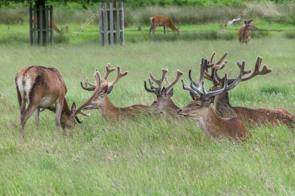 group of deer's sitting in grass