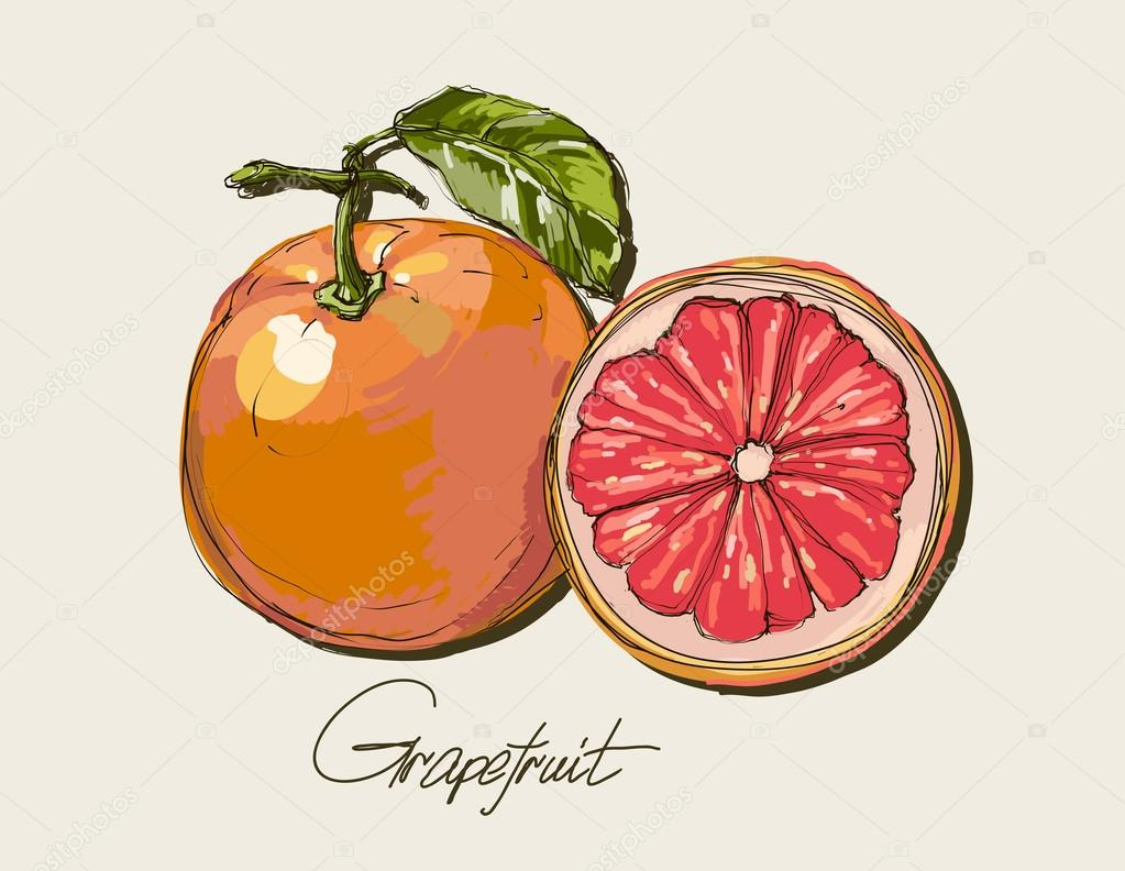 Vector fresh ripe grapefruit with leaves.