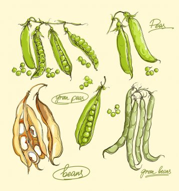 Vector illustration set of green peas