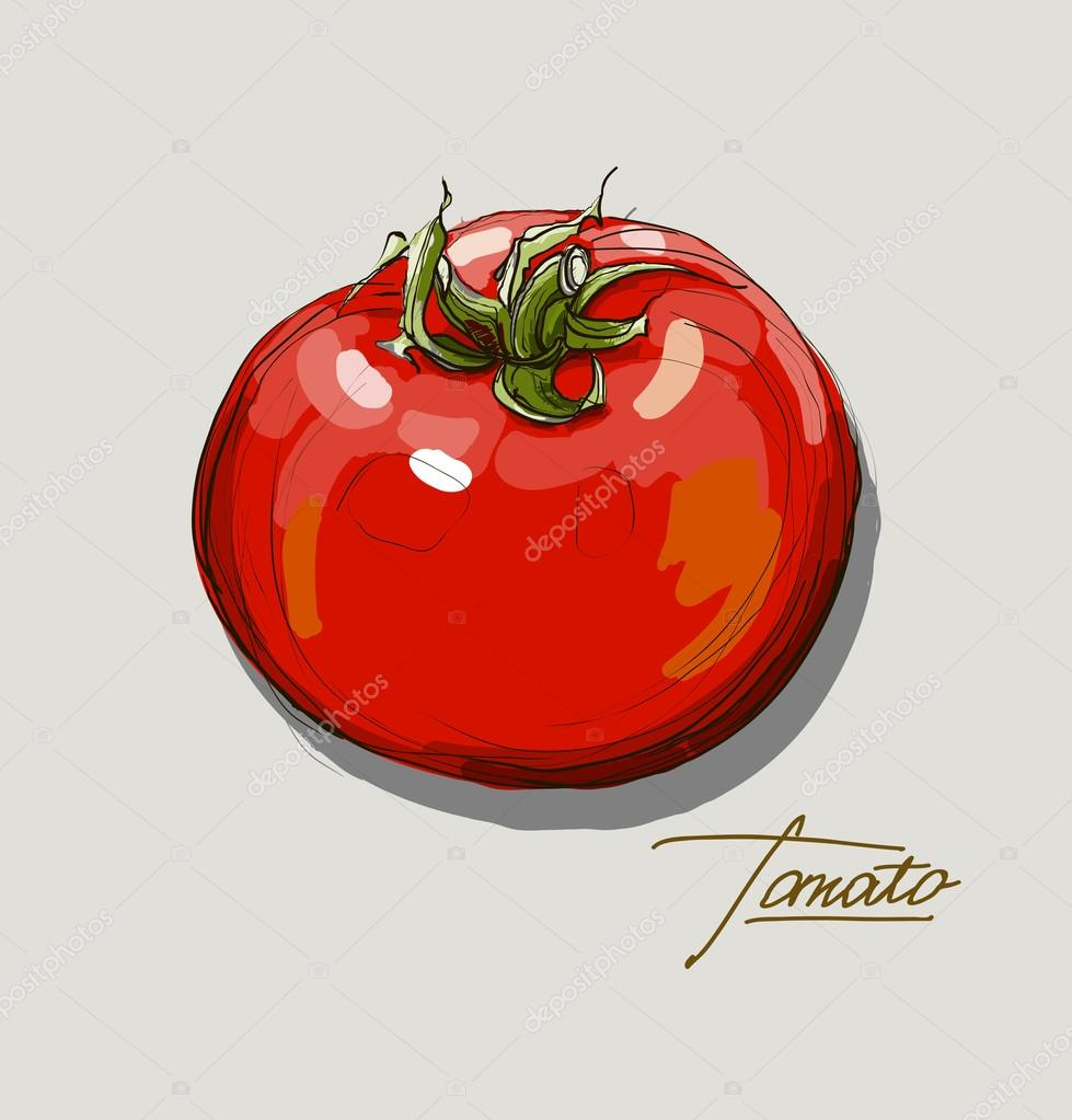 vector hand drawing juicy tomatoes