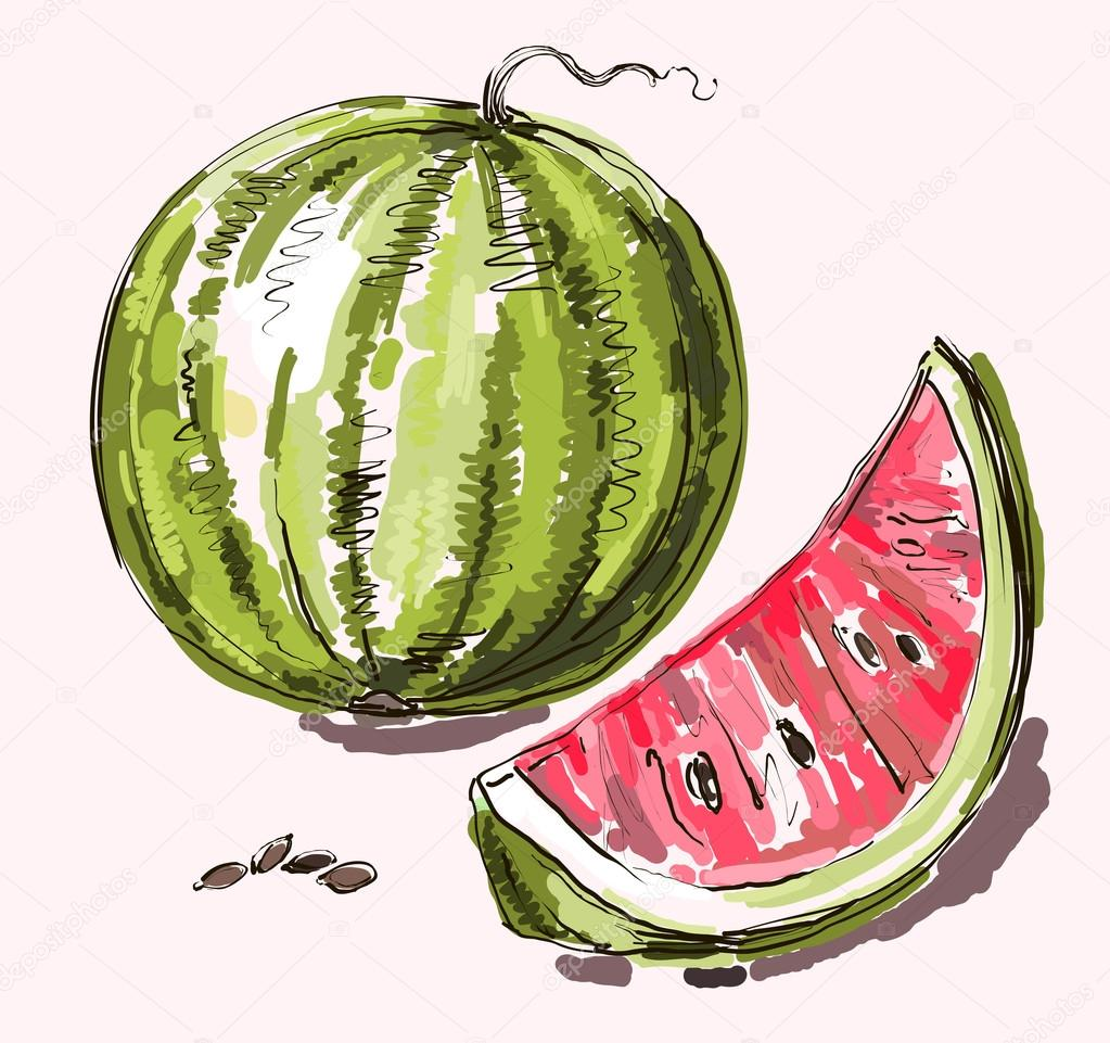 Vector hand drawing realistic watermelon