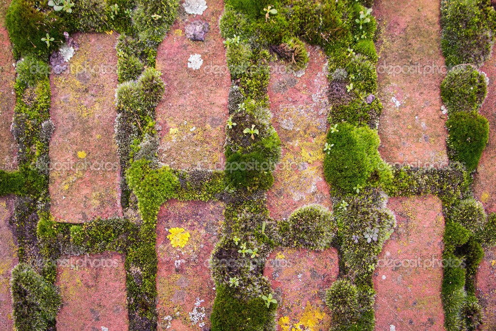Moss structure with bricks on the terrace