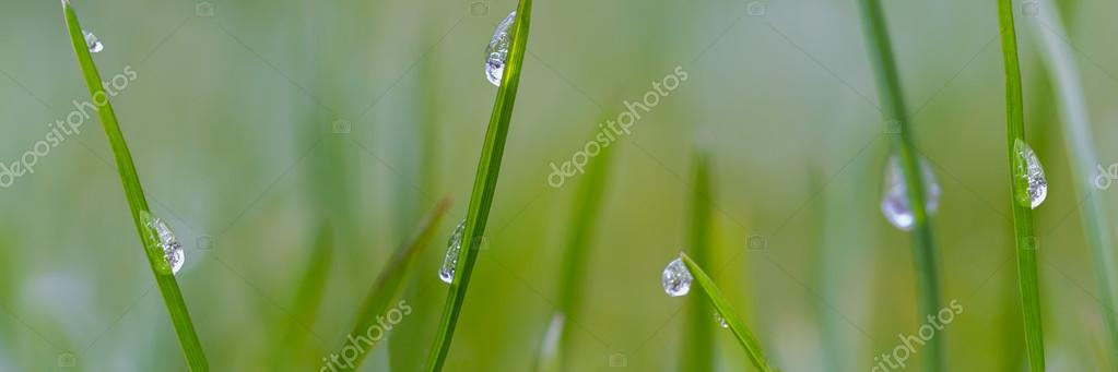 Panorama macro with raindrops in the grass